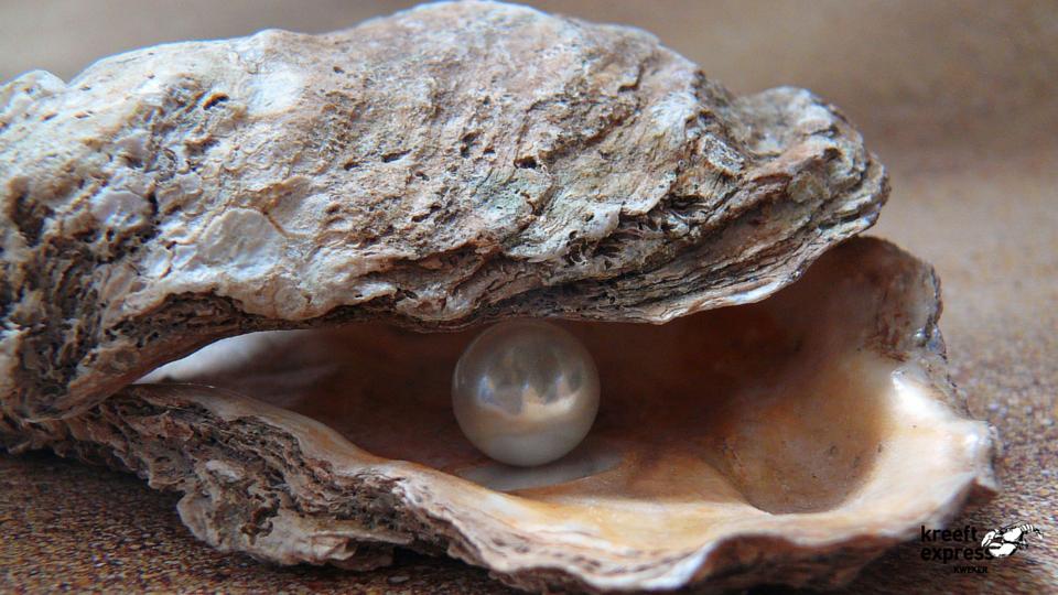 oester met parel